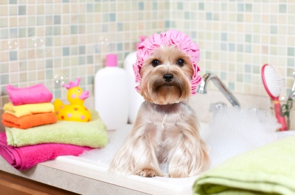 giving puppy a bath, grooming, massaging